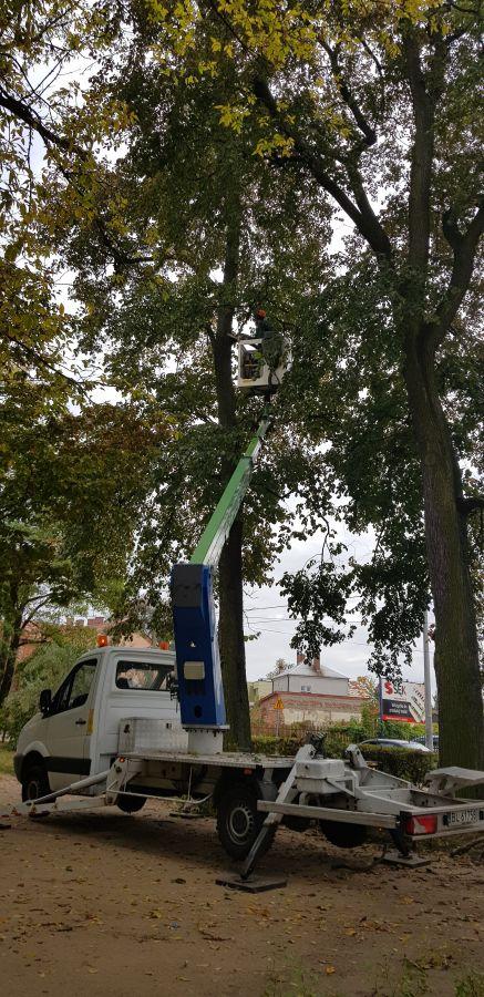 mężczyzna przycina gałęzie drzew