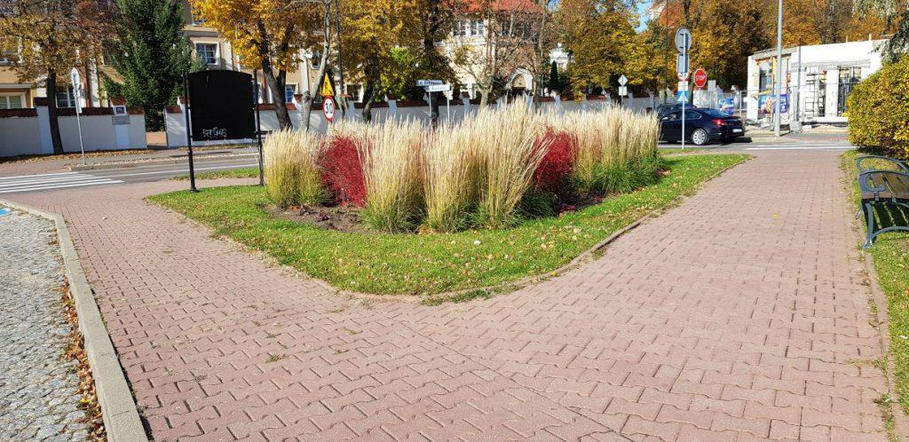 widok na ozdobne trawy