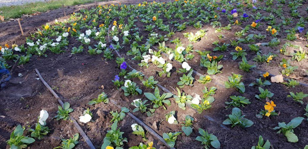 widok na kwiaty na rondzie Hanki Bielickiej