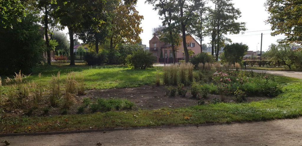 widok na oczyszczony park