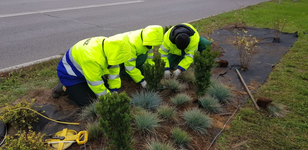 pracownicy uzupełniają nasadzenia drzewek