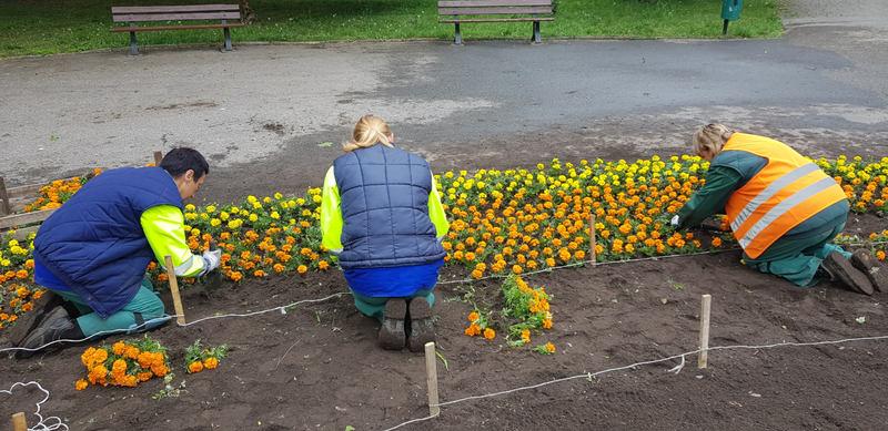 kobiety nasadzają kwiaty