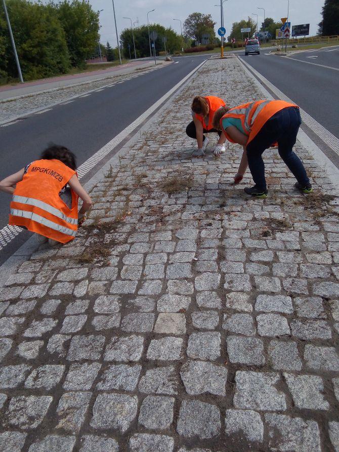 Oczyszczanie z porastających chwastów z zatok autobusowych