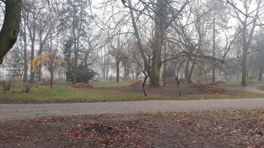 widok na posprzątany park