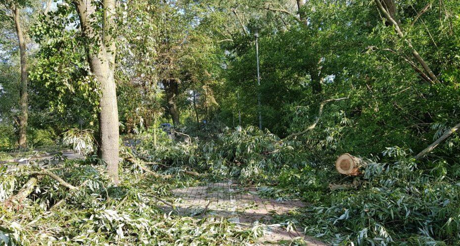 połamane drzewa po nawałnicy