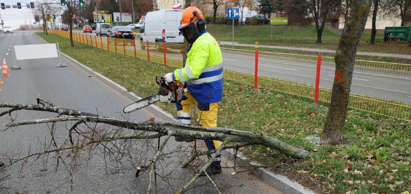 pracownik MPGKiM wycina drzewo na ulicy Zawadzkiej