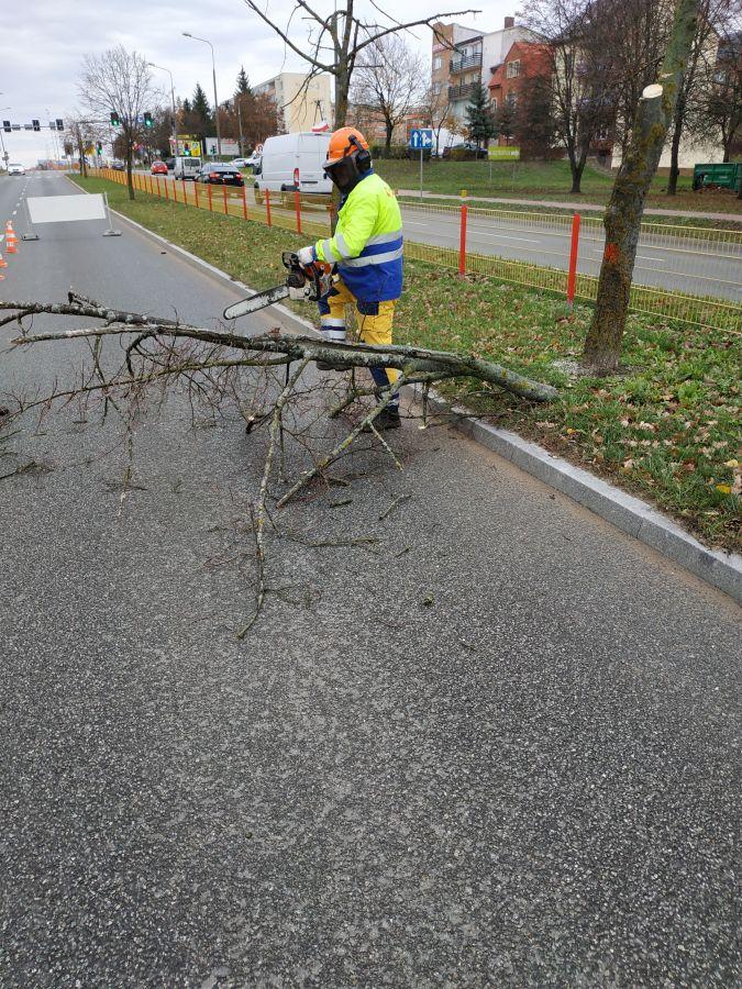 pracownik MPGKiM wycina drzewo