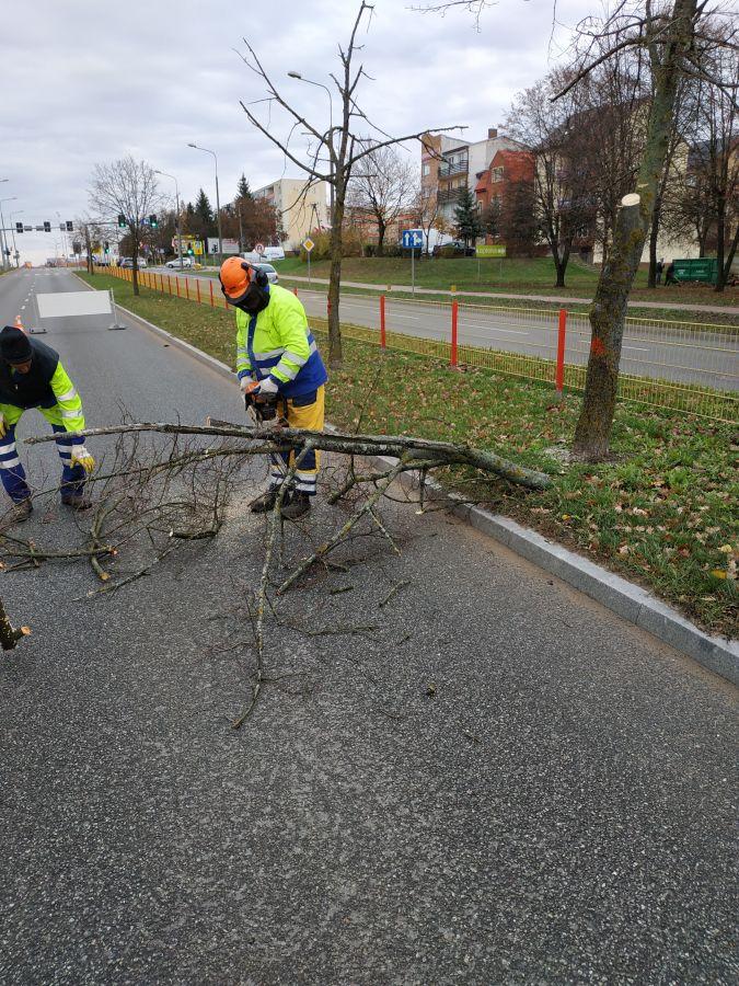 pracownik MPGKiM obcina gałęzie