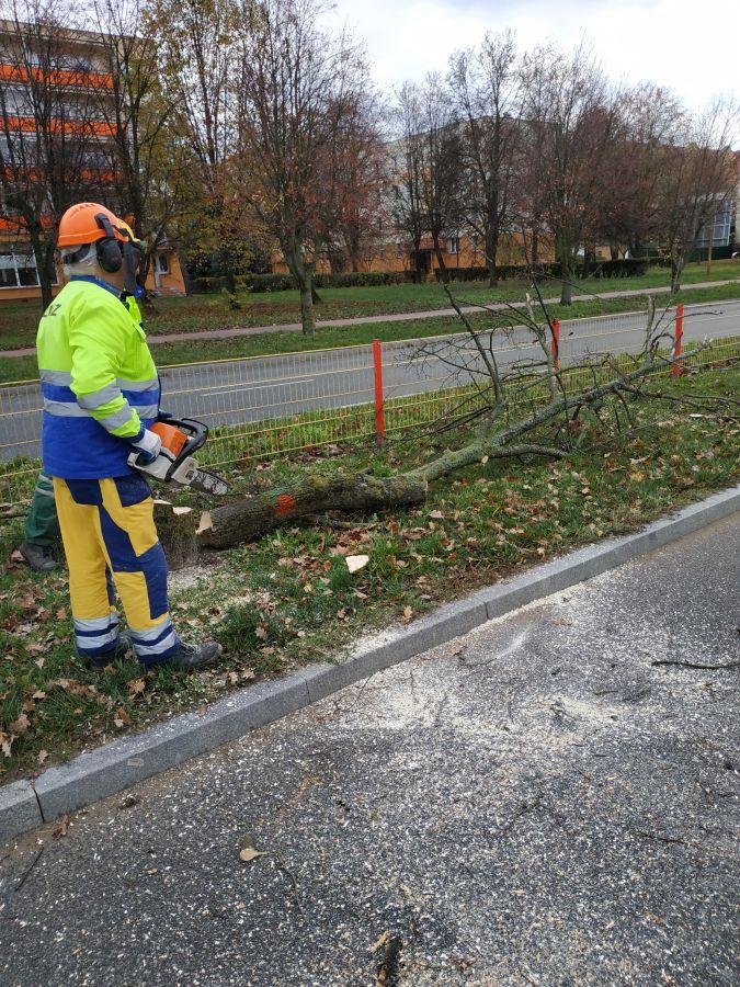 pracownicy MPGKiM wycinają drzewa