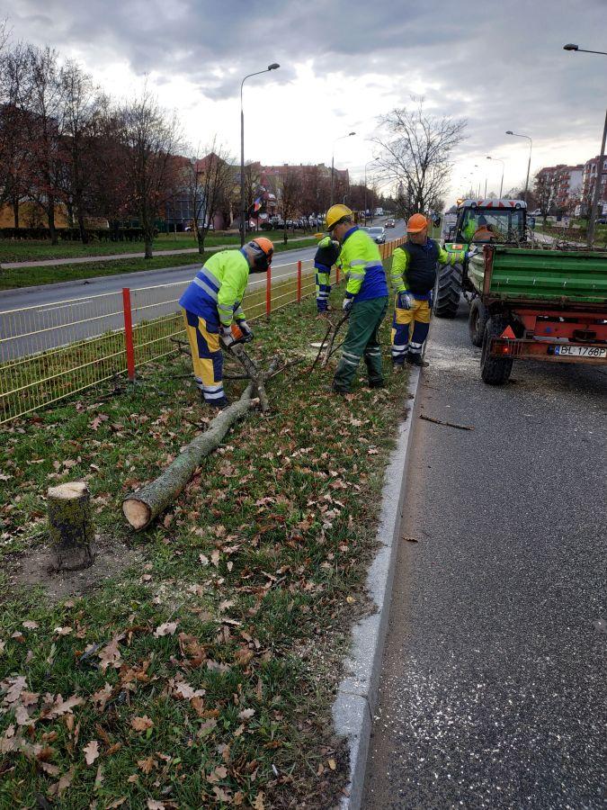 pracownicy MPGKiM sprzątają po wycince drzew
