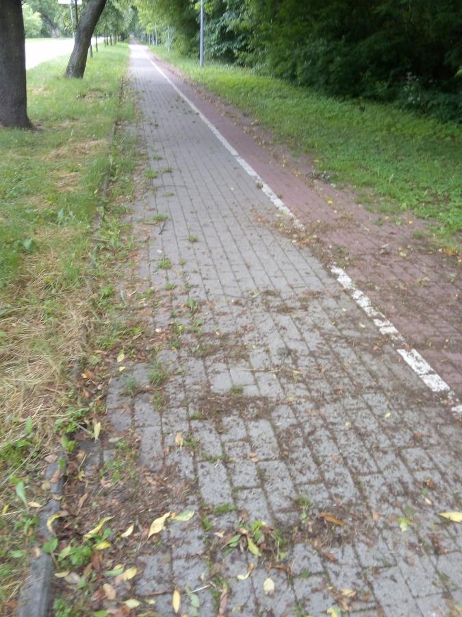 zarośnięty chodnik na grobli jednaczewskiej
