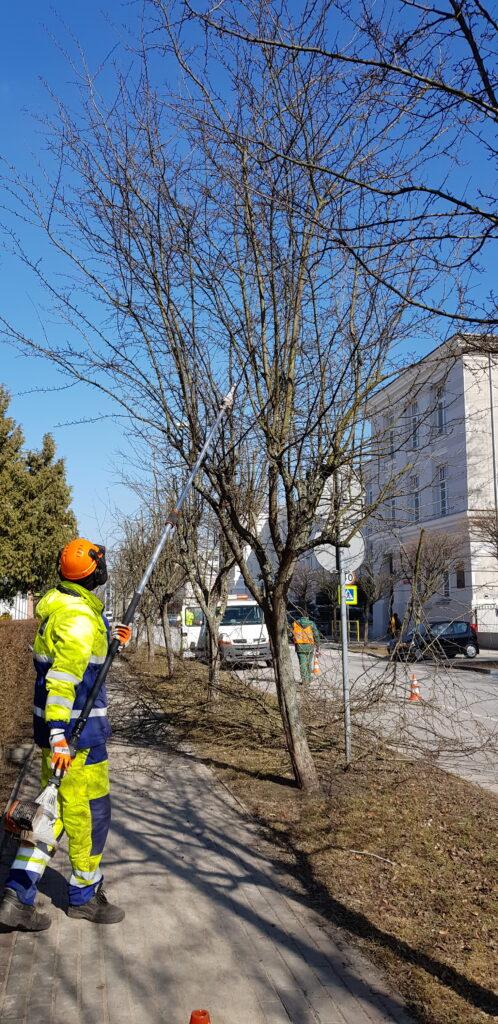 mężczyzna przycina drzewa