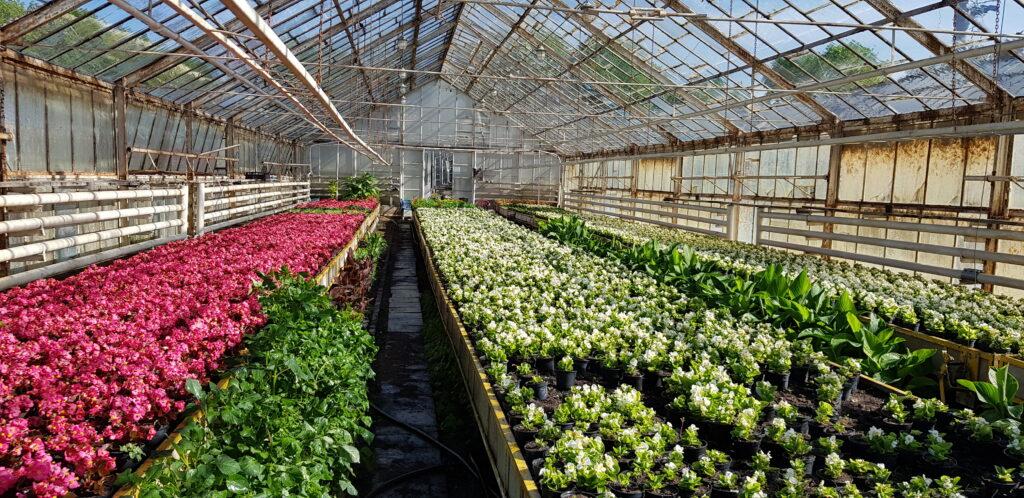 kwiaty na produkcji ogrodniczej