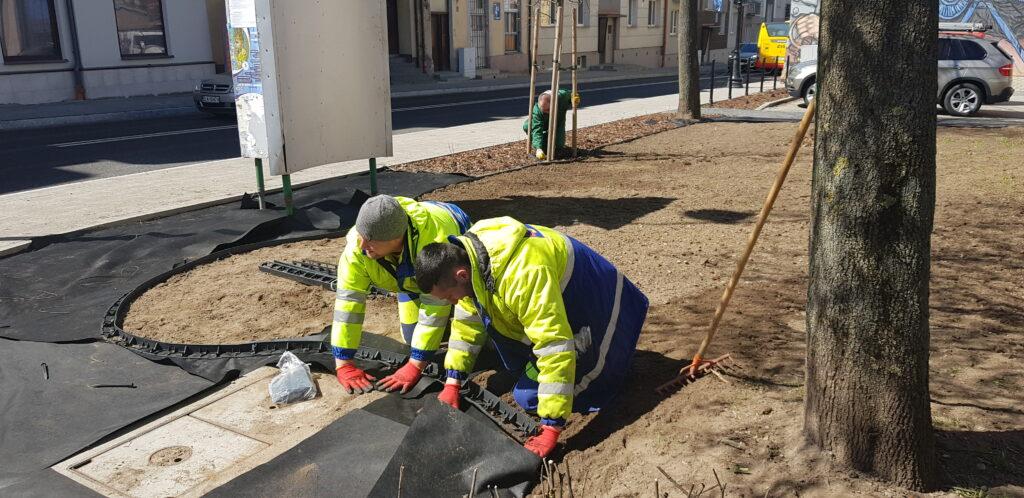 mężczyźni przygotowywują terenu pod nowe nasadzenia ul.  Rządowa