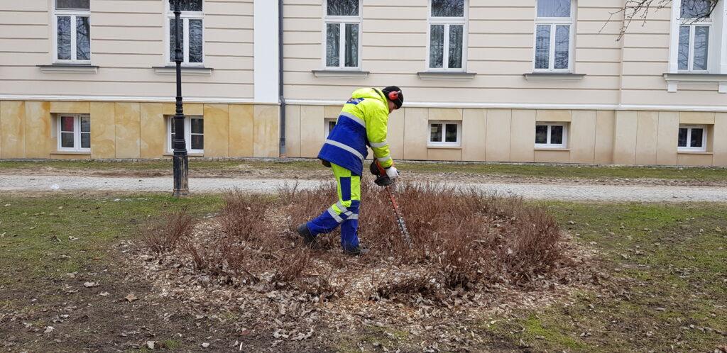 mężczyzna przycina krzewy